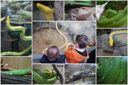 2010_04_11_zoo_de_Beauval11
