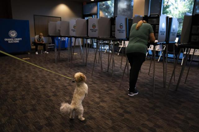 Two-year-old dog Teddy pulls on a leash while owner Dana Brajevic casts her ballot at a vote center, Tuesday, Sept. 14, 2021, in Huntington Beach, Calif. With Gov. Gavin Newsom's fate at stake, Californians cast the last of the ballots that will decide whether he continues to lead them or if the nation's most populous state veers in a more conservative direction amid anger over his actions during the COVID-19 pandemic. (AP Photo/Jae C. Hong)