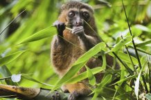 The coronavirus is threatening to put a stop to the protection of endangered species