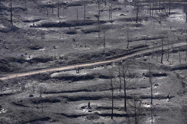 """Burned trees are seen on Troodos mountain, in Ora village, southwestern Cyprus, Sunday, July 4, 2021. Cyprus search crews discovered the bodies of four people outside a fire-swept mountain village on Sunday in what a government minister called the """"most destructive"""" blaze in the east Mediterranean island nation's history. (AP Photo/Petros Karadjias)"""