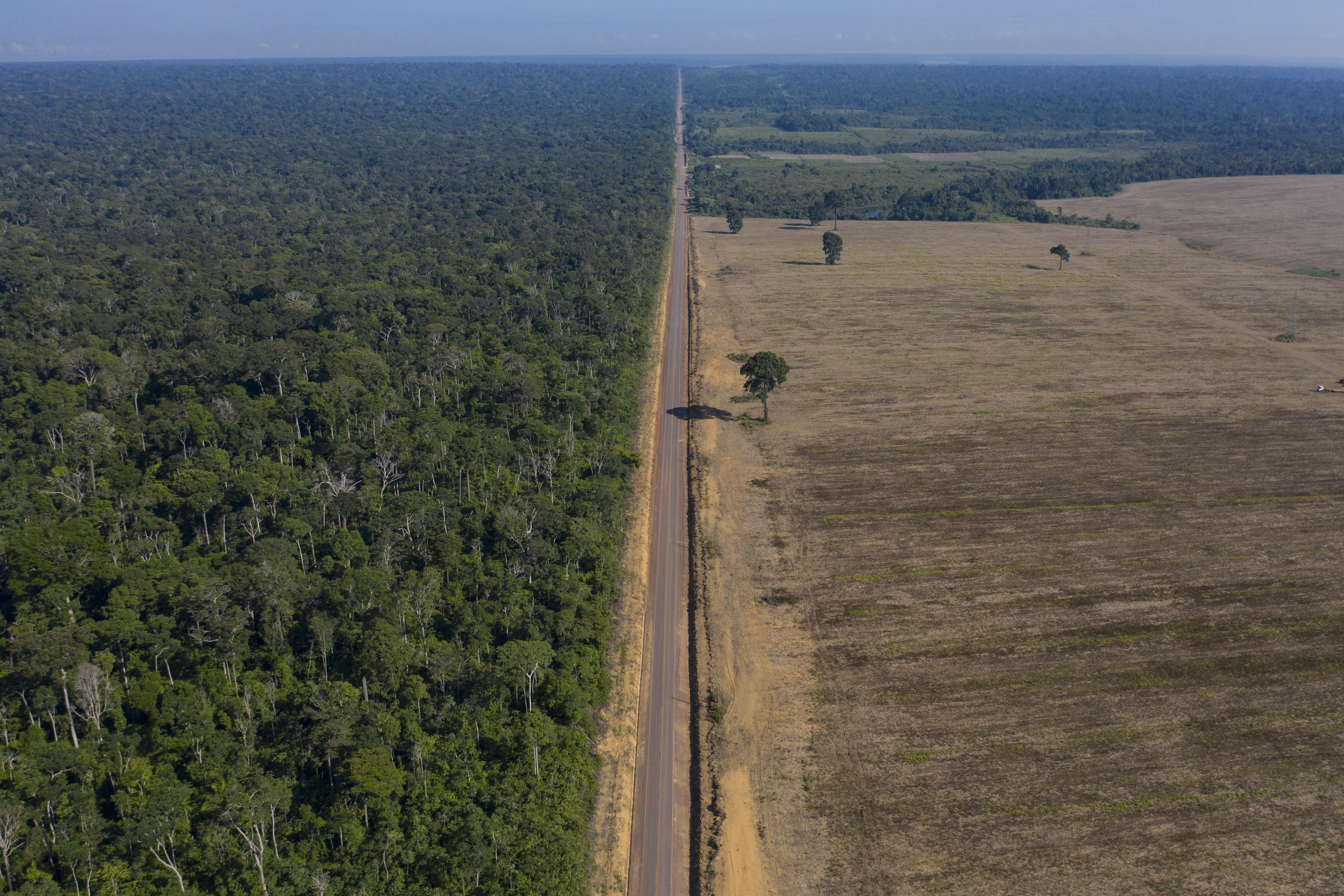 deforestation can include rain forests, as well as woodlands. Brazil S Amazon Deforestation Surged In April After Pledges