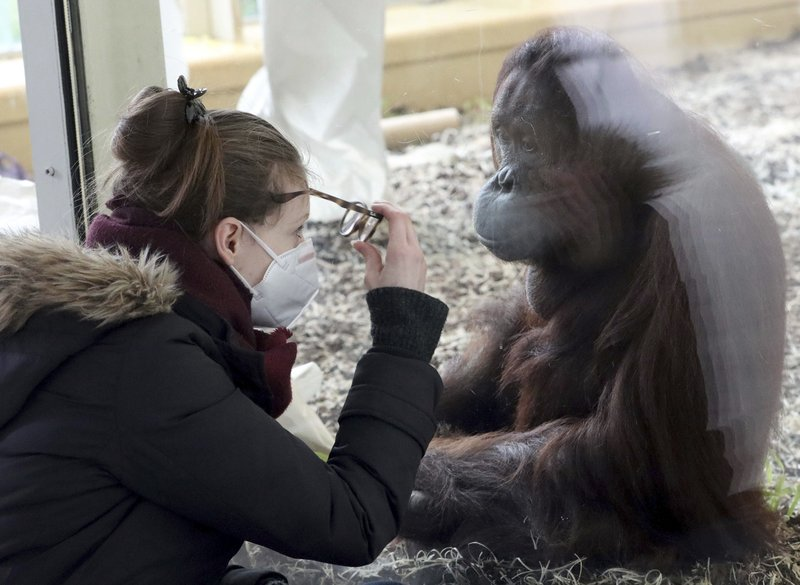 Philadelphia Zoo could soon be vaccinating animals against COVID-19