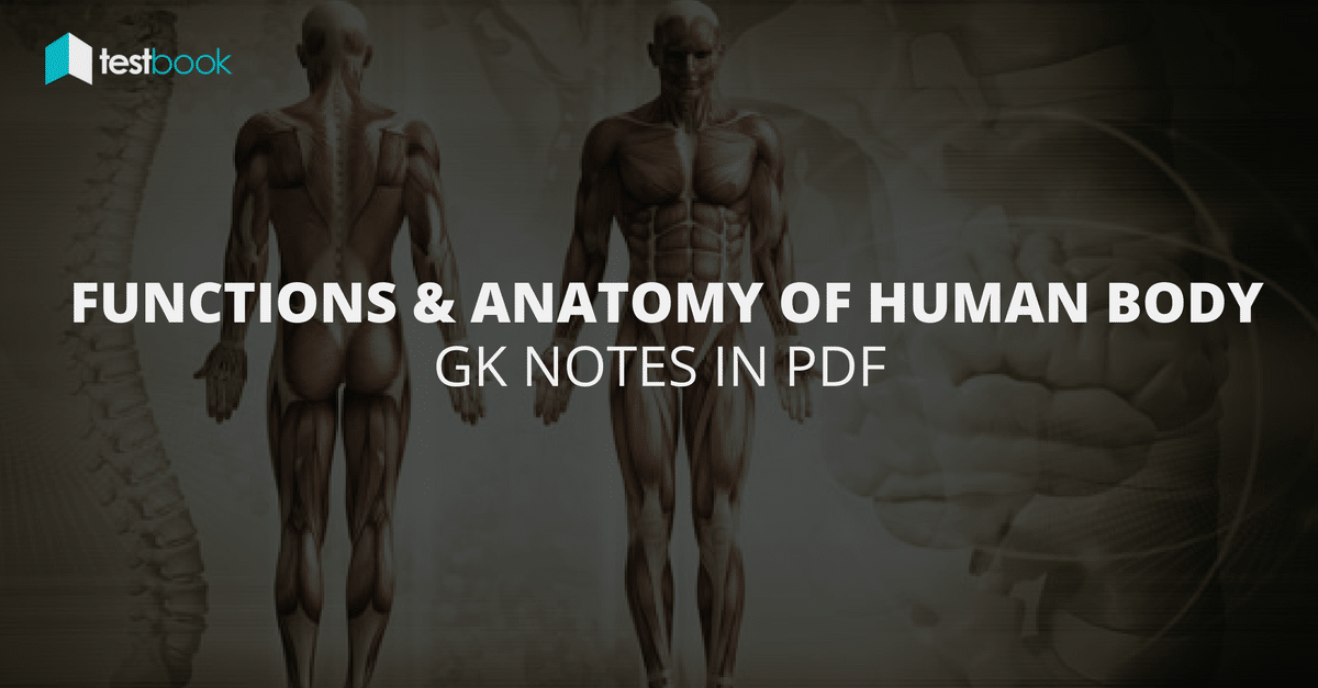 Functions and Anatomy of Human Body - GK Notes in PDF - Testbook Blog