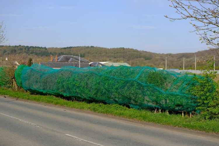 Watch – Developers slammed after setting 'death traps' for birds using netting to stop them nesting