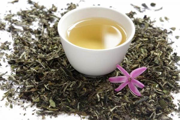 White Tea meningkatkan kolagen kulit