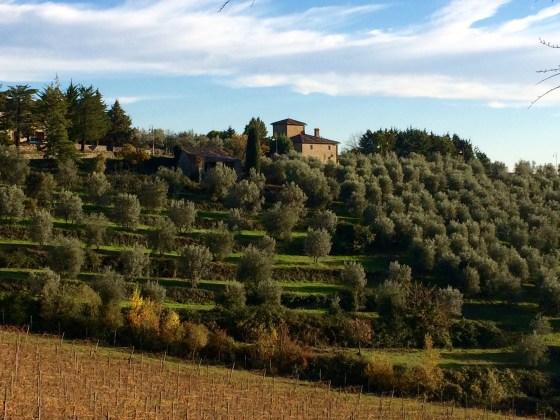 Brunello di Montalcino 2010, colline vigneti ed oliveti