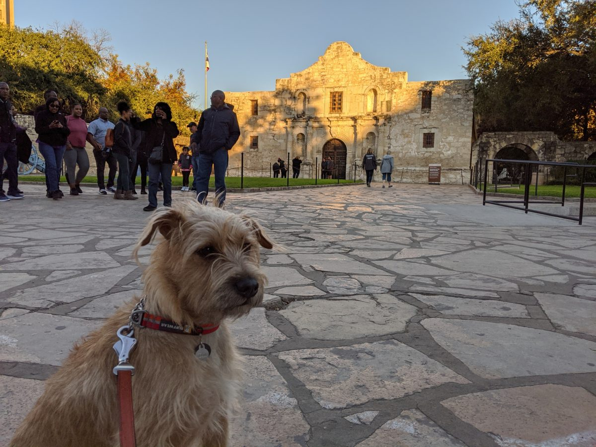 Road trip with my dog. At the Alamo