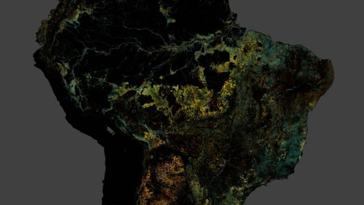 article-forest-watch-inline-2-2x.jpg