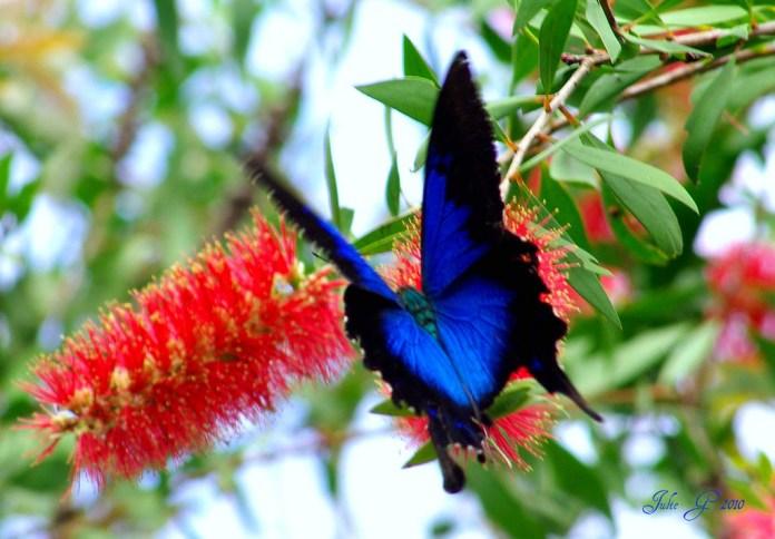 cairns butterfly sanctuary