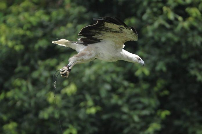 Birds of prey in Jurong Bird Park