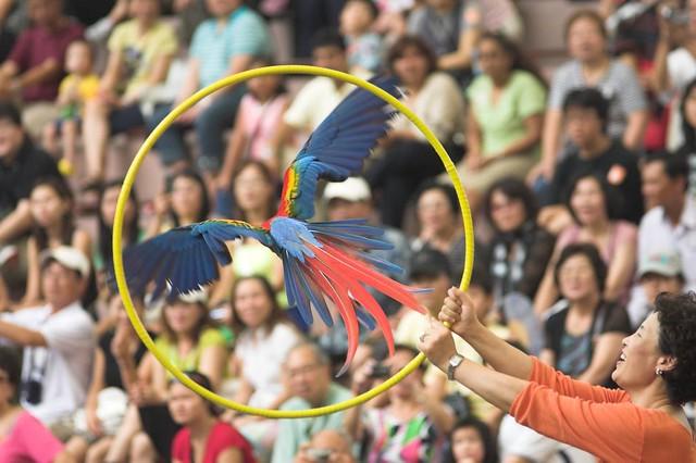 Many people enjoy the bird-got-talents shows