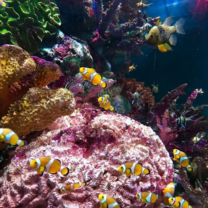 Coral Reef in Sea Life Bangkok