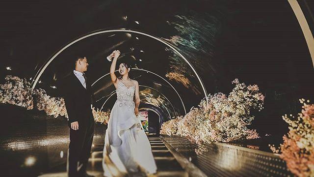 Pre-wedding photo taken inside the aquarium