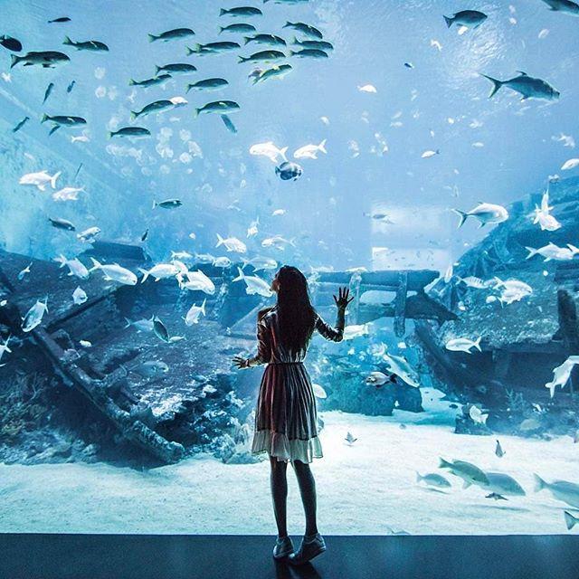 Open Ocean Habitat