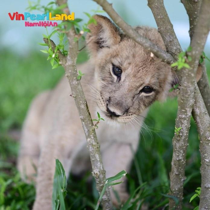 công viên safari river công viên nước vinpearl nam hội an