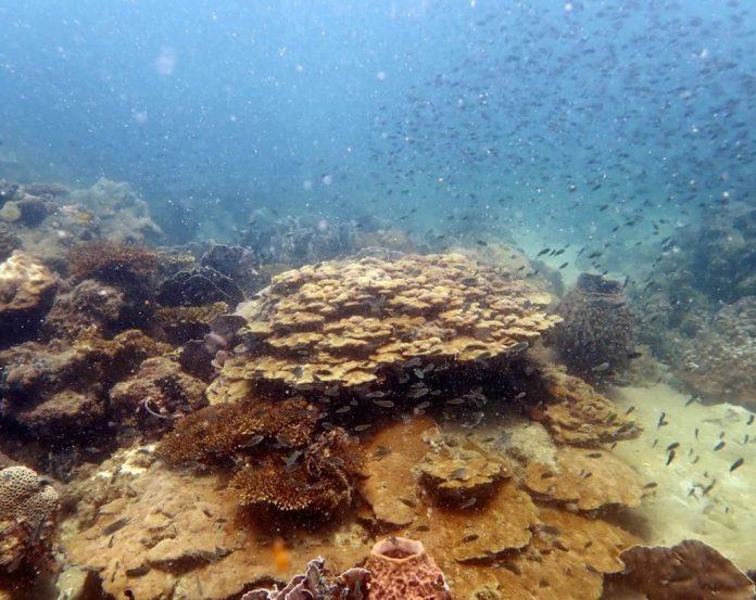 rạn san hô nam đảo phú quốc