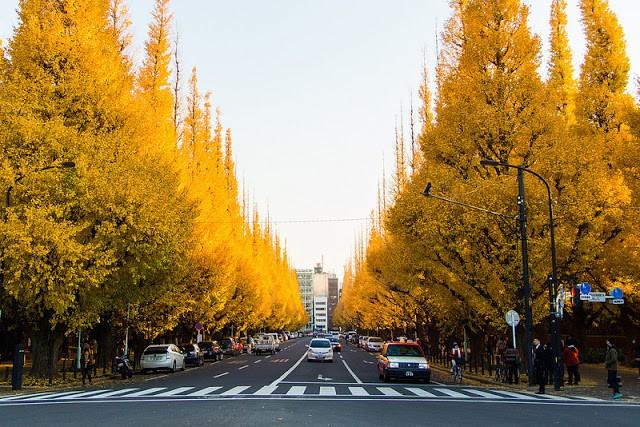 Chọn thời điểm để du lịch Tokyo tự túc