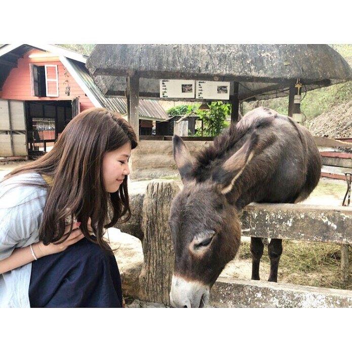 tham quan sở thú tại chiang mai