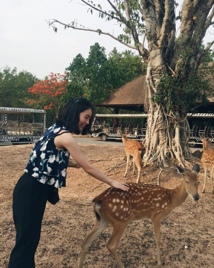 tham quan chiang mai night safari