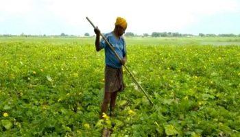 कांट्रेक्ट फॉर्मिंग से खेती बनी लाभ का व्यवसाय