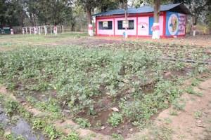 बाड़ी विकास योजना से ग्रामीणों को हो रहा आर्थिक लाभ