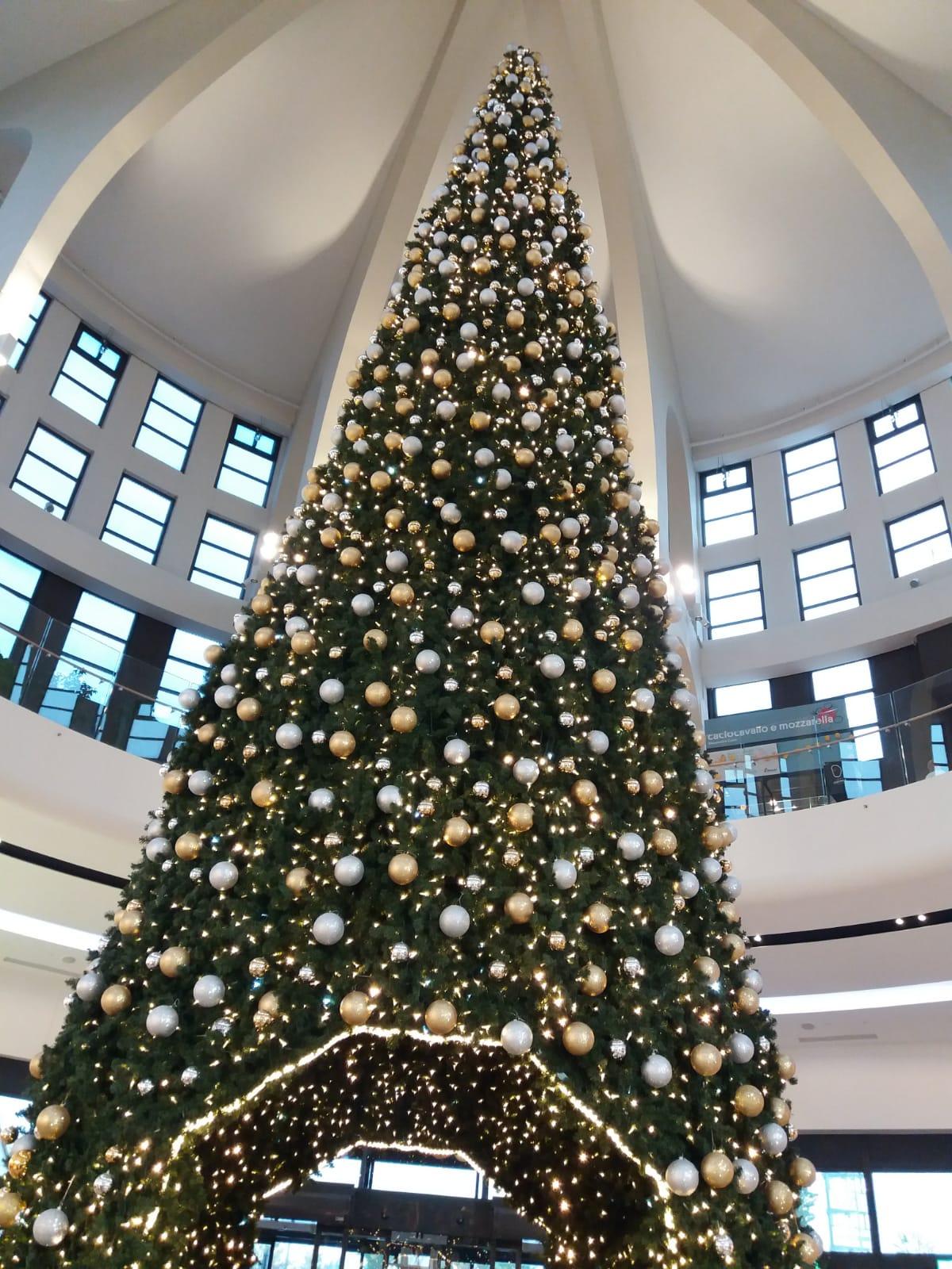 Albero Di Natale Zecchino Doro.Natale Ai Gigli Con L Albero Alto 16 Metri Piana Notizie