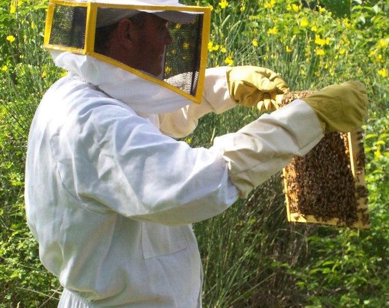 Franco con telaini di miele