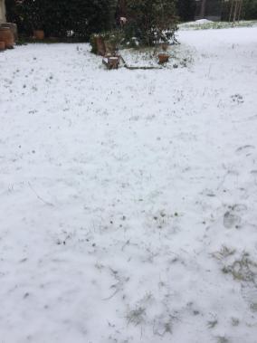 viola neve 4