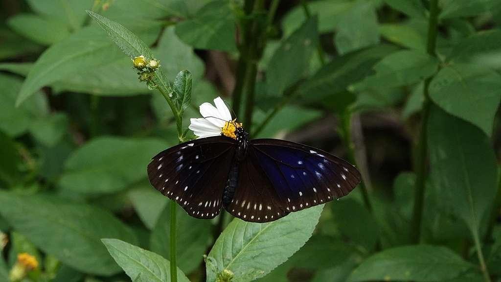 【最美的香 · 郊之 3】最美的蝴蝶谷 - Greenpeace 綠色和平 | 香港