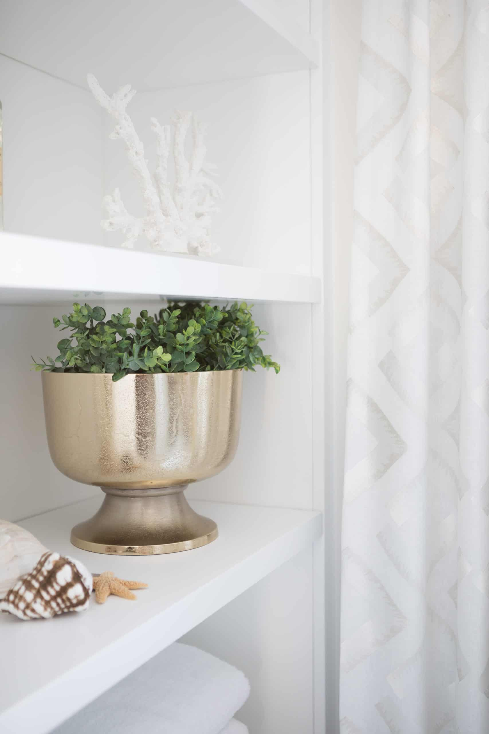 Potted plant on a white shelf