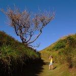 A tree at Sigatoka National Park, Fiji, branches finely