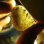 A close look at Darwin glass- photo by Spikey Riddoch