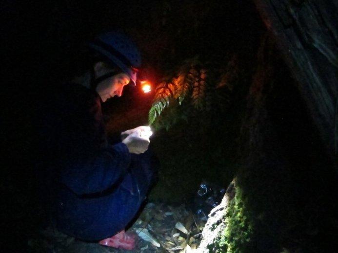 Rachell Patterson investigates forest glowworms
