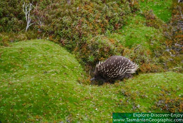 Beware of echidnas