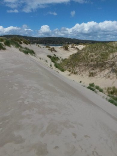 The crest of the dune is swept clean while lower sheltered places sustain thin vegetation - At Five Mile Beach