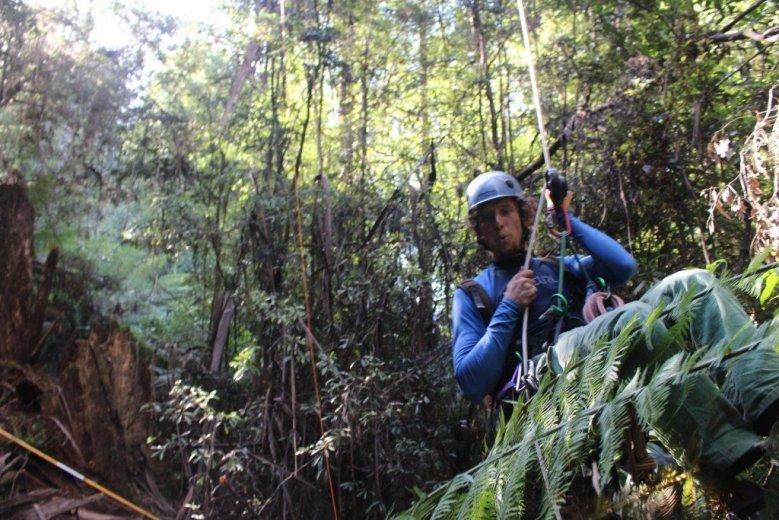 ClimbingTheTallestFloweringTree_byYD BarNess_TasmanianGeographic___3646