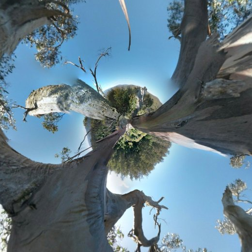 ClimbingTheTallestFloweringTree_byYD BarNess_TasmanianGeographic___Photosphere_D Upper Crown_Planet