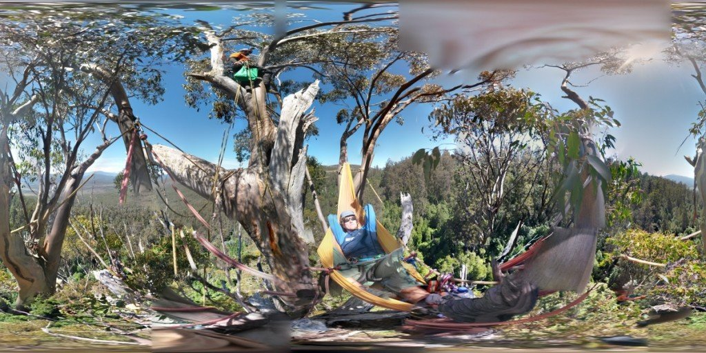 ClimbingTheTallestFloweringTree_byYD BarNess_TasmanianGeographic___Photosphere_E Treetop_1200px