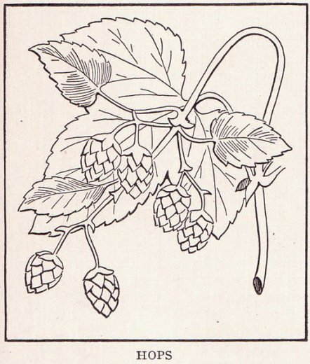 511px-Hops_page_1371- via Wikimedia Commons