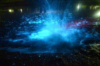 Bioluminescence Lauderdale Canal 2 - by Lisa-ann Gershwin