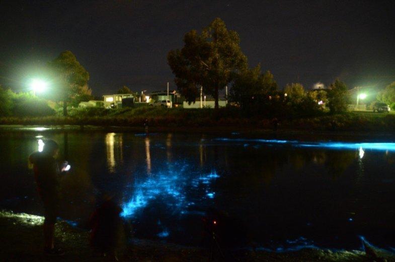 Bioluminescence Lauderdale Canal kids playing  - by Lisa-ann Gershwin