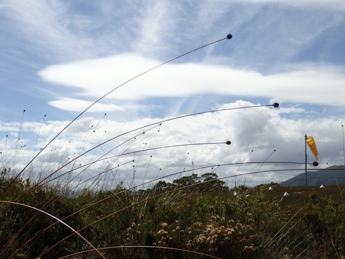 Buttongrass throwing a party by the Melaleuca airstrip - by Nicole Gill
