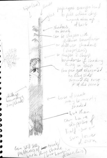 Notes for flooded gum portrait - shadows on tree trunk - by Paula Peeters