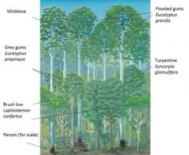 Selected features of a wet sclerophyll forest dominated by flooded gums - by Paula Peeters