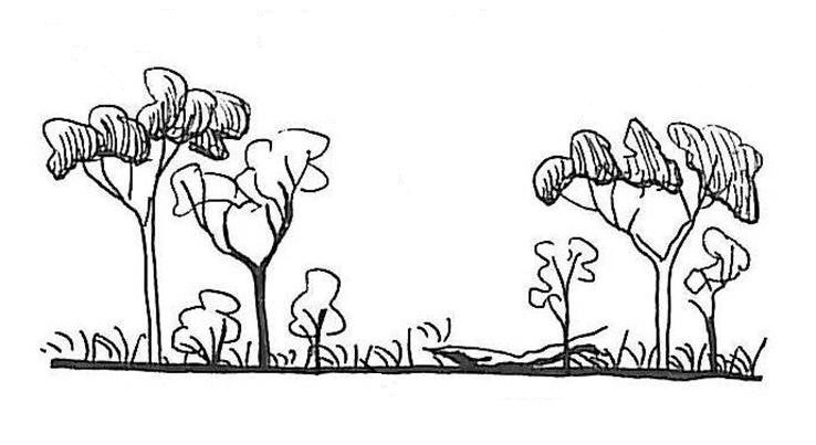 Simple profile drawing of a mature eucalypt grassy woodland - complete with old trees, good grass cover and woody debris - by Paula Peeters