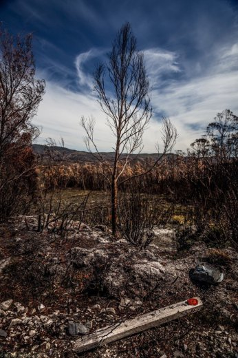 Dempster Plains fire -The cost of early inaction -  A message sent from sky, tree and land- by Nicole Anderson