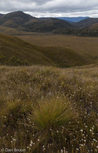 Next day after crossing a swollen Cracroft River we entered buttongrass country- by Dan Broun