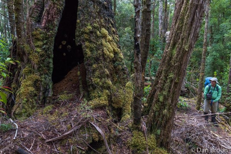 Pockets of wet forest pockmark the plains- by Dan Broun