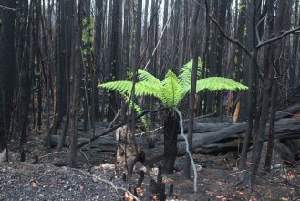 Scouting the Burnt Forest - by YD BarNess-GiantTreeExpeditions- 16