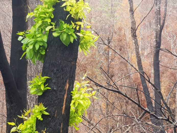 Scouting the Burnt Forest - by YD BarNess-GiantTreeExpeditions- 18